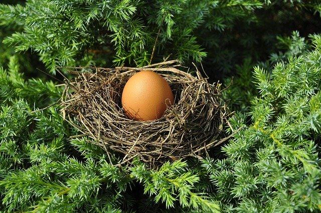 vejce v hnízdě