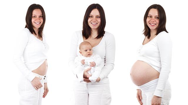 fáze těhotenství