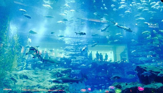akvárium v Dubaji
